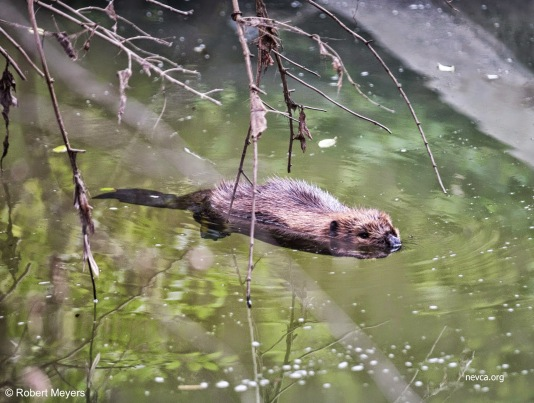 Beaver Piney Branch Northside Park Vienna VA
